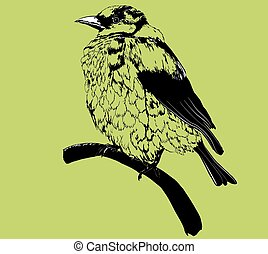 sparrow - isolated stylized black sparrow, rough sketch of...