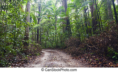 Fraser Island - Dense tropical rain forest on Fraser Island