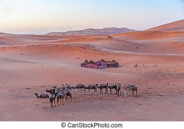 Bedouin camp in the Sahara desert in Morocco, Africa