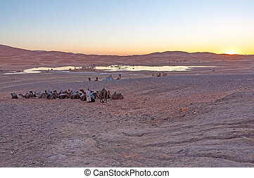 Bedouin camp in Sahara desert in Morocco, Africa