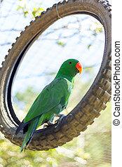 verde, Papagaio, em, selvagem, vida, Criando, centro,