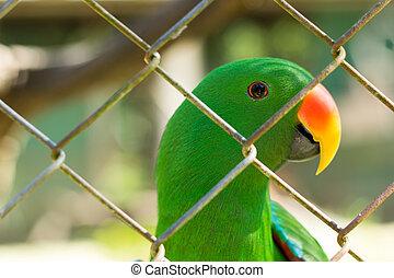 verde, Papagaio, behide, gaiola, em, selvagem, vida,...