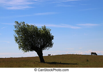 Two cows and a tree - Two cows eating grass and one lonely...