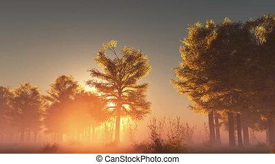 rising sunrise in forest