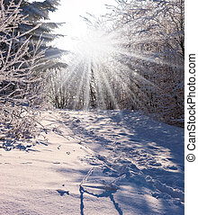 Solar Christmas morning in a snowy forest The Winters Tale