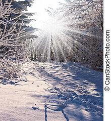 Solar Christmas morning - Solar Christmas morning in a snowy...