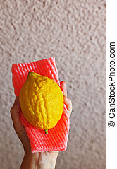 The Etrog in female hand - Ritual fruit - Etrog in female...