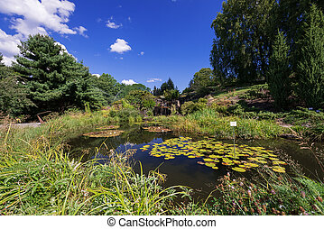 Pond with waterfall waterlily flowers in Oslo botanical...