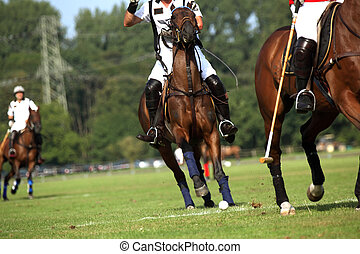 Polo Competition - Two horses in motion during a polo...