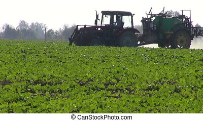 tractor spraying rapeseed field - tractor sprinkler spraying...