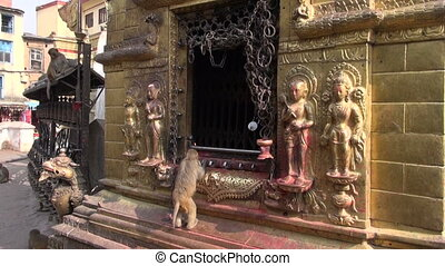 monkey on Swayambhunath stupa golden sacrificial altar in...