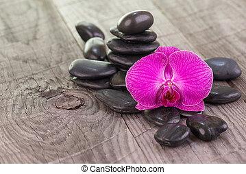 Purple Phalaenopsis orchid - Purple Moth Orchid and black...