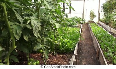 Vegetable Garden, Food Crops