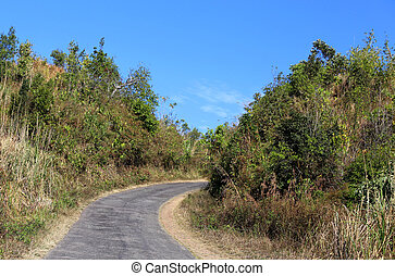 Road over hills in Bangladesh through green woods
