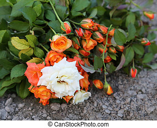 Bouquet of rose in ground