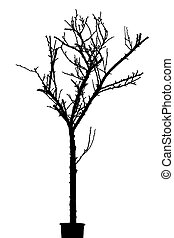 Black Silhouette of Dry Tree Isolated on White Background.