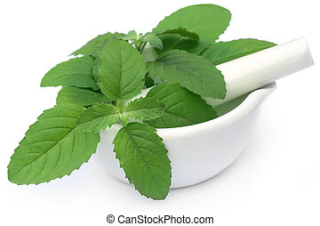 Medicinal holy basil or tulsi leaves on a mortar with pestle