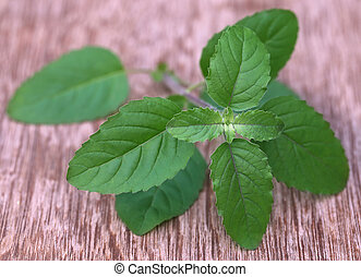 Medicinal red tulsi leaves
