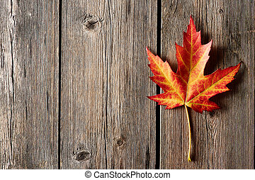 Autumn maple leaf over wooden background - Autumn maple leaf...