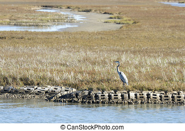 Blue heron on coastline in Aransas National Wildlife Refuge,...