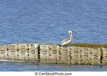 Grey pelican on coastline in Aransas National Wildlife...