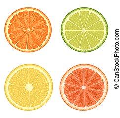 Citrus set isolated on white