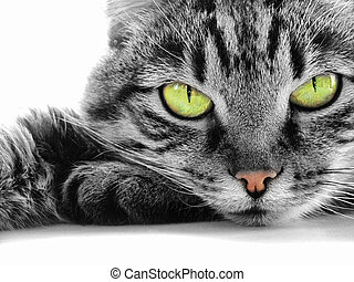 green-eyed cat - Close-up portrait of green-eyed cat...