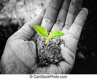 pequeno, árvore, segurando, mão