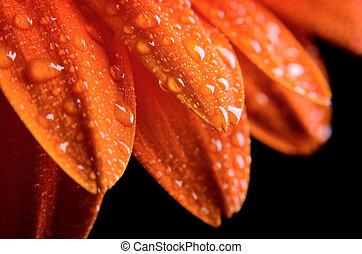 Dew on flower