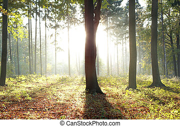 Sunlight behind a tree