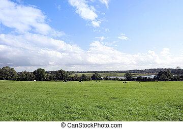 lush green Longford farmland - green lush farmland fields...