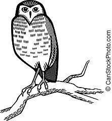 Owl on a Branch - Line art an owl perched on an old tree...