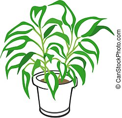Houseplant - Vector illustration of a dieffenbachia potted...