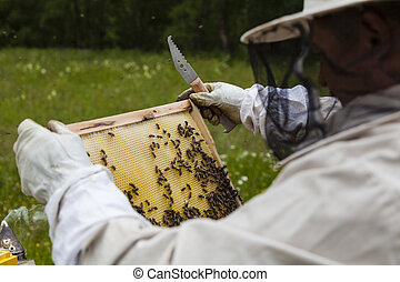 Beekeeper working with beehives in Alpine meadow