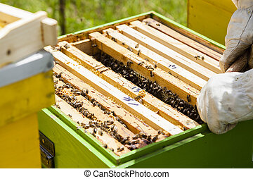 Beekeeper working with beehives in Alpine meadow.