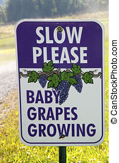 Slow Please - Baby Grapes Growing Sign on the roadside of a...