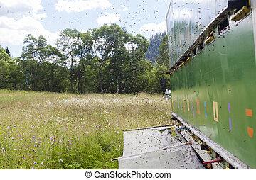 Honeybee truck