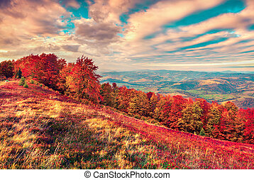Colorful autumn sunrise in the mountains. Instagram toning...