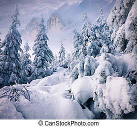 Trees covered with hoarfrost and snow in mountains. Retro...