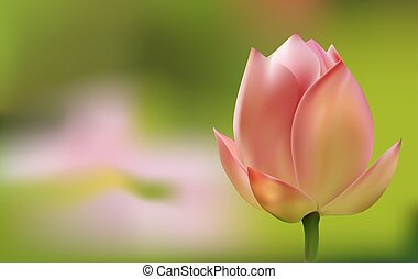 Delicate pink Tulip on green background - Delicate pink...
