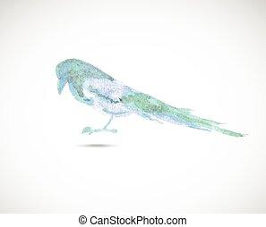 Watercolor magpie