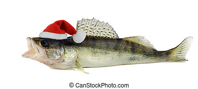 Santa hat in Walleye or Zander isolated on white background