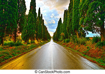 Bolgheri famous cypresses tree straight boulevard on sunset...