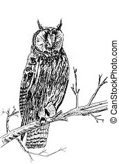 owl sketch illustration - a owl on tree sketch illustration...