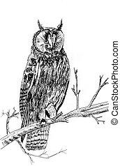 owl sketch illustration - a owl on tree sketch illustration...
