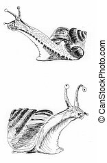 snail sketch illustration painting on paper