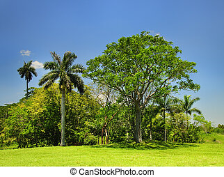 Cuban countryside landscape - Landscape with cuban trees and...