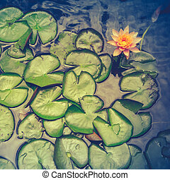 Retro Pink Water Lily And Pads - Retro Filter Photo Of Water...