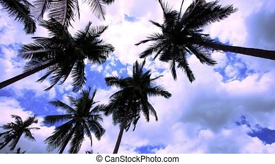 Timelapse palms at blue sky background with clouds. HD....