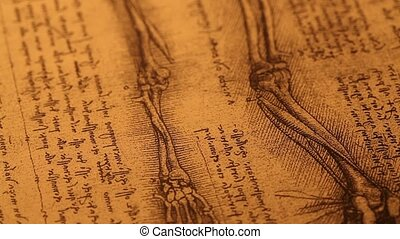Anatomy?art - 14th century?anatomy?art by Leonardo Da Vinci...